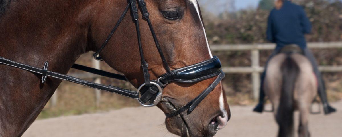 En hest med trense på